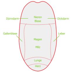 Zungendiagnostik Grafik